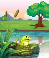 Une grenouille au dessus d'un tronc avec des algues