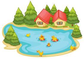 canard dans un étang vecteur
