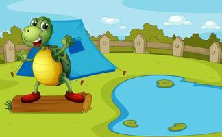 Une tortue au bord de l'étang à l'intérieur d'une clôture
