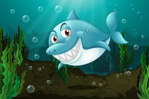 Un requin souriant
