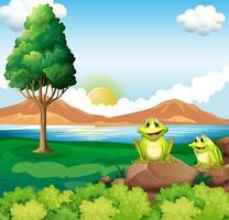 Deux grenouilles au-dessus du rocher près de la rivière vecteur