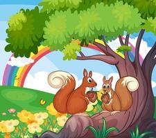 Un arbre avec des écureuils vecteur