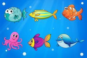 Créatures de la mer sous les profondeurs de la mer