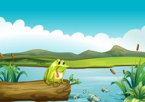 La grenouille solitaire vecteur