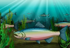 poisson vecteur