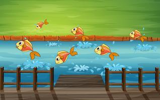 Un banc de poisson