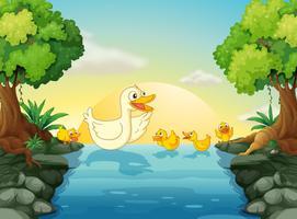 Canards à la rivière