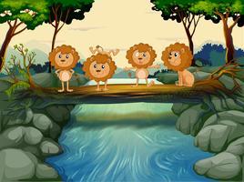 Quatre jeunes lions à la rivière