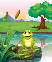 Une grenouille au bord du lac vecteur