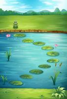 Une grenouille et un lac