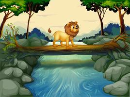 Un lion traversant la rivière