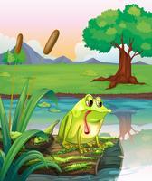 Une grenouille solitaire au-dessus du bois avec des algues