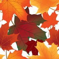Feuilles d'érable automne sans soudure fond Floral