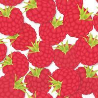 Modèle Berry. fond transparent de framboise. Ingrédients alimentaires vecteur