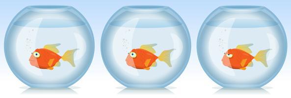 Poisson d'or vie et temps dans l'aquarium vecteur