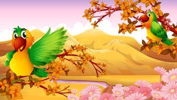 Deux oiseaux colorés près de la rivière