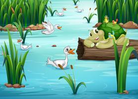 Animaux et étang vecteur