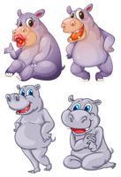 Quatre hippopotames vecteur