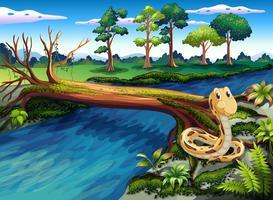 Un serpent au bord de la rivière