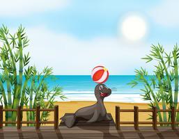 Un phoque joue au ballon