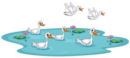 Un groupe de canards à l'étang vecteur