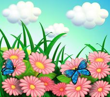 Les deux papillons dans le jardin