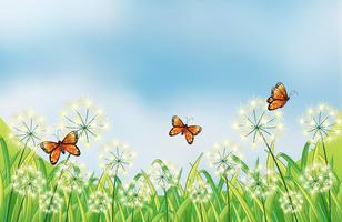 Papillons orange