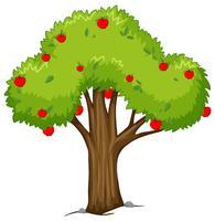 Pommier aux pommes rouges vecteur