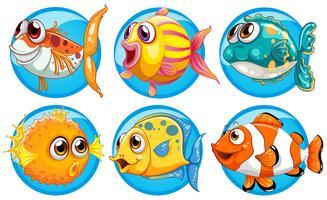 Différents types de poisson sur un badge rond vecteur