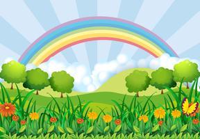 Le champ et l'arc-en-ciel vecteur