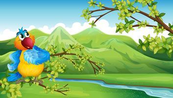 Un perroquet devant les hautes montagnes