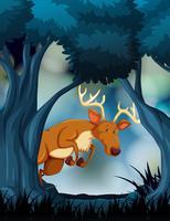Un cerf dans la sombre forêt vecteur