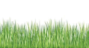Bordure transparente d'herbe Fond extérieur de l'été Nature skyline vecteur
