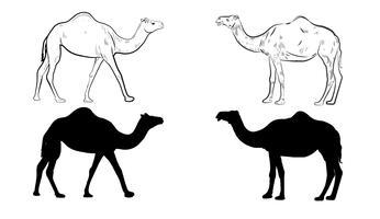 Silhouette de chameau vecteur
