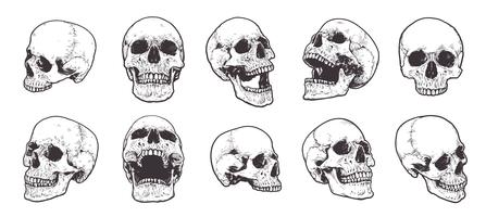 Set de vecteur de crânes anatomiques