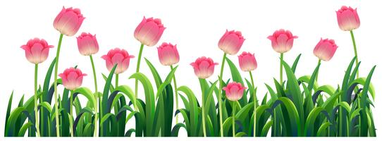Tulipes roses dans le jardin