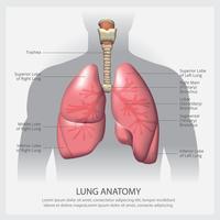 Poumon avec illustration vectorielle de détail