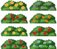 Ensemble de buissons avec des fleurs vecteur