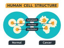 Cellule vecteur