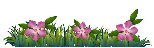 Fleurs de pervenche rose dans le jardin vecteur