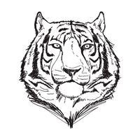 illustration vectorielle de tigre ligne art vecteur