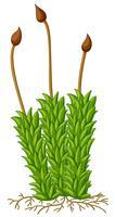 Plante mousse avec racines vecteur