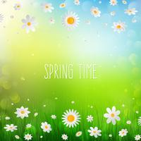 Fond de printemps avec des fleurs blanches dans l'herbe.