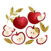 Pommes dessinées à la main de vecteur