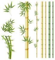 Ensemble de plantes de bambou vecteur