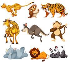 Ensemble d'animaux sauvages