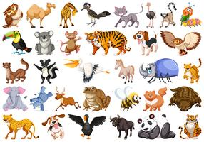 Ensemble d'animaux sauvages vecteur
