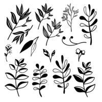 Éléments botaniques dessinés à la main vecteur