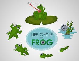 Cycle de vie de la grenouille vecteur