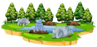 Rhinocéros sauvages dans la nature